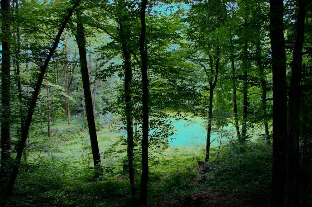 Wald und Weier, 2012 Pigment Inkjetprint 30x42 cm 1:3 / signiert und nummeriert Fr. 560.- plus Porto