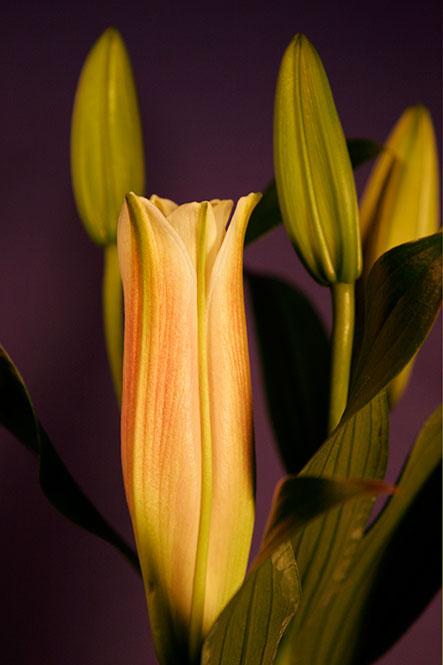 4-Lilienblueten