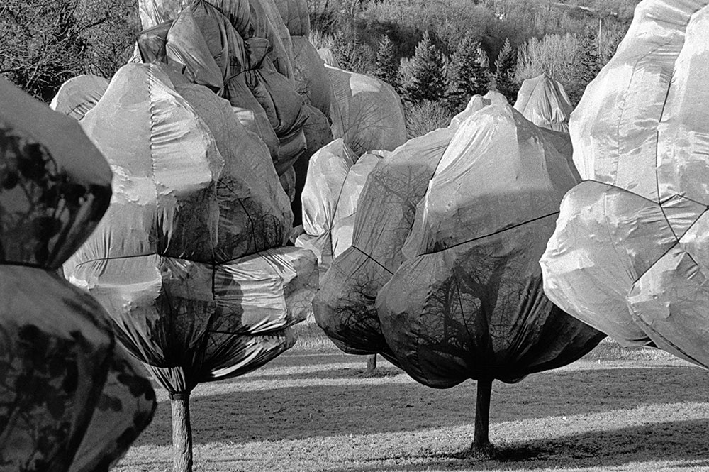 4-Wrapped-Trees_Riehen-Basel_Christo-und-Jeanne-Claude